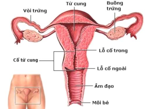 Đừng hối hận khi bị suy buồng trứng sớm, hãy tìm hiểu ngay 5 nguyên nhân