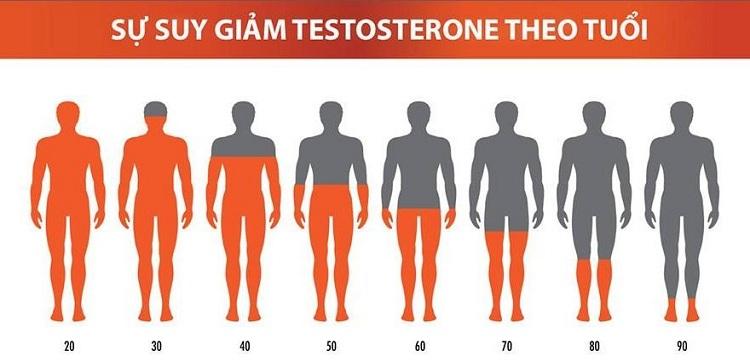 Testosterone là gì Ảnh hưởng của Testosterone tới sức khỏe